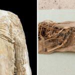 9 objetos conservados más antiguos del mundo