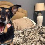 Desafío visual de un perro que evoca Internet