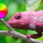 Razones por las que los camaleones cambian de color