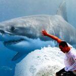 El surfista permanece quieto mientras se encuentra a una distancia mortal del tiburón.